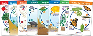 Best insect bulletin board Reviews