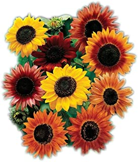 Sunflower Seeds for Planting | Heirloom & Non-GMO | 30 Sunflower Seed Mix to Plant in Home Gardens | Full Planting Instruc...