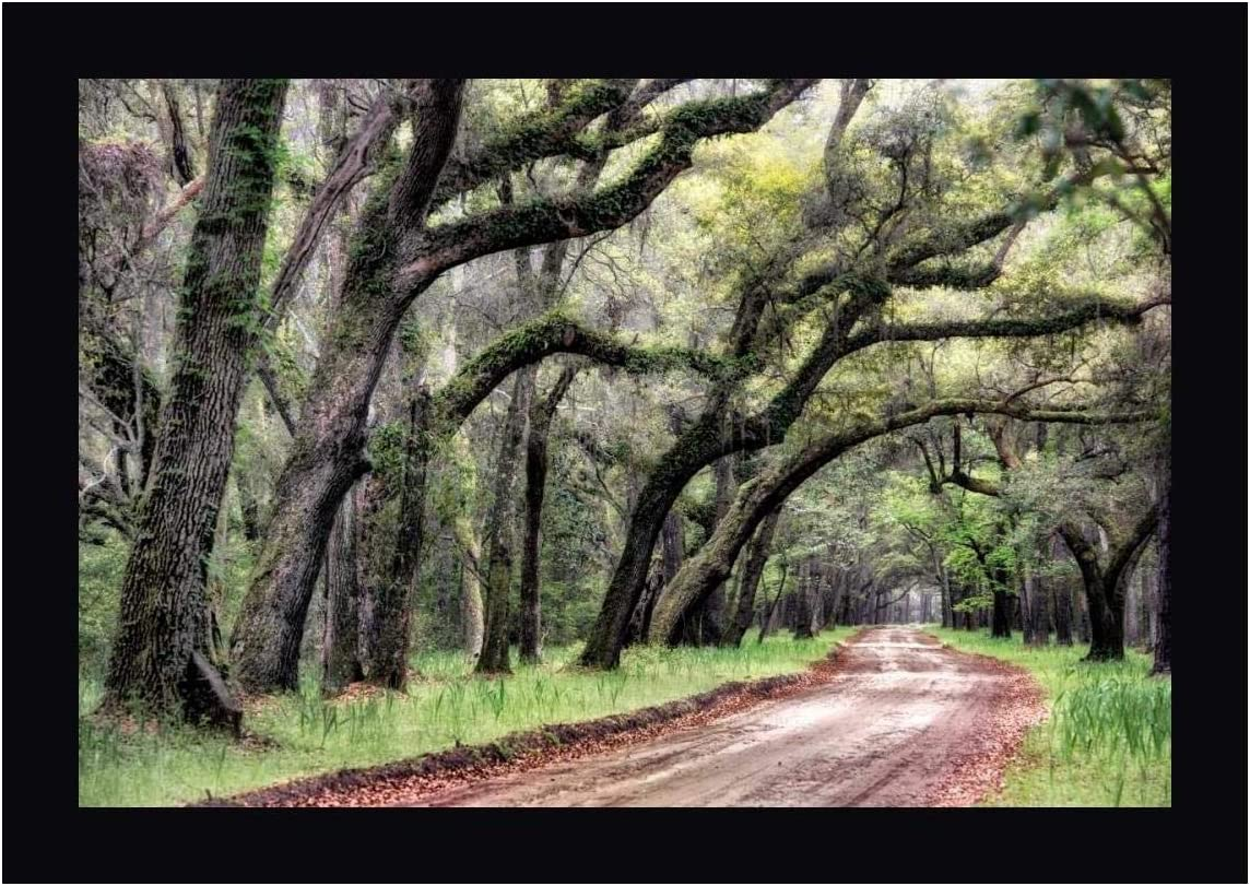 Amazon Com Dirt Road Ii By Danny Head 25 X 38 Canvas Art Print Gallery Wrapped Ready To Hang Posters Prints