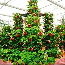 Amazon.es: El cultivo de la fresa