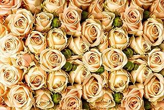 Colorful Rose hep Flower Seeds for Home Garden Yard Decoration, 50 Seeds (Champagne Rose Seeds)