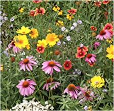 Earthcare Seeds Xeriscape Dryland Western Wildflowers Mix 1000 Seeds - Non GMO - Heirloom - Open Pollinated