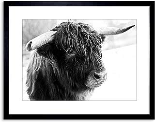 The Art Stop Photo Composition Animal Livestock Highland Cow Bull Framed Print F97X5508