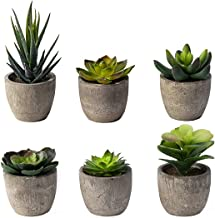 Best tiny plants for office desk Reviews