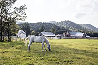 Photograph - A white horse grazes on a farm near Harmonyville, a part of Townshend, Vermont- Fine Art Photo Reporduction 66in x 44in