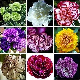 BullkerDirect 50Pcs Mixed Color Lisianthus Eustoma Plant Flower Seeds, Home Garden Bonsai Decor Eustoma Grandiflorum Seeds