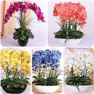 Bornbayb 200 PCS Mixture Phalaenopsis Seeds Butterfly Orchid Seeds Bonsai Flower Seeds Home Plant