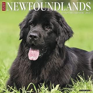 Just Newfoundlands 2020 Wall Calendar