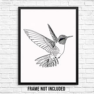 black and white hummingbird pictures