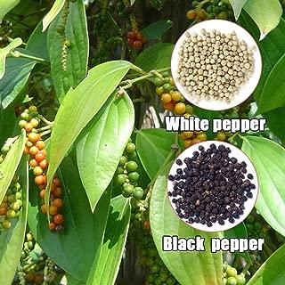 Amazon.es: semillas ecologicas