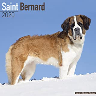 St Bernard Calendar 2020 Saint Bernard - Dog Breed Calendar - Wall Calendar 2019-2020