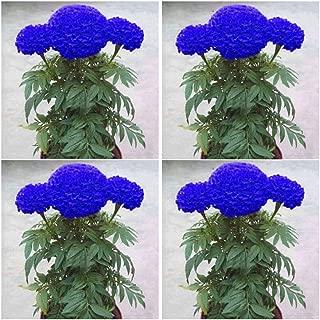 8QzJs1Tg 200 Pcs Blue Marigold Seeds Bonsai Chrysanthemum Flower Romantic Pure Blue Flower Garden Plant Yard Decor Decorative Plant one Size