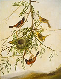 Fine Art Print - Joseph Bartholomew Kidd - Orchard Oriole 1830 - Vintage Wall Decor Poster Reproduction - 36in x 44in