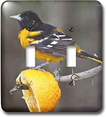 3d Rose Lsp 183360 1 Ten Birds Cartoon Single Toggle Switch Amazon Com