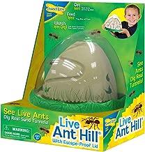 ant farm buy online