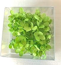 あじさい 小分け 3g ハーバリウム プリザーブドフラワー 花材 (グリーン)