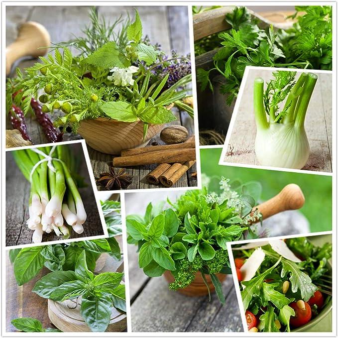 22 opinioni per Raccolta di semi di erbe aromatiche 15 pacchetti individuali delle nostre erbe