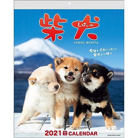 アクティブコーポレーション 2021年 カレンダー 壁掛け 森田米雄 まるごと柴犬 ACL-11