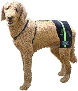 dog hip hound brace