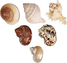 SLSON 6 Pack Large Shells for Hermit Crabs Different Type Changing Natural Seashells No Painted Hermit Crab Supplies, 1 to 2 inch Opening Width
