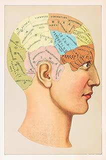Phrenology Anatomy Illustration 1891 Cool Wall Decor Art Print Poster 12x18