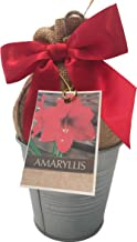 Rustic Tin Red Lion Amaryllis Holiday Gift Growing Kit, Deluxe Edition. Includes a Rustic Silver Pot, 1 Large Bulb, a Burlap Gift Bag and Professional Growing Medium