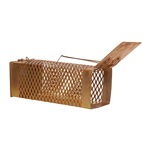 Mouse Trap Cage Buy Mouse Trap Cage Online At Best Prices In India Amazon In