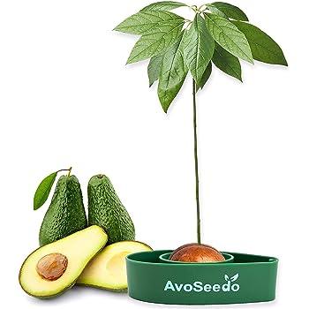 InGrowth Kit jardinería Interior para germinar y Plantar tu árbol ...