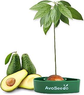AvoSeedo Kit Jardineriapara Aguacate - Gadget