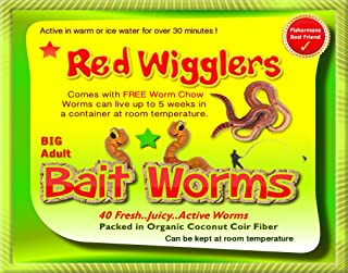Insectsales.com Red Wigglers (40 Adult) Live, Healthy Red Worms #1 Bait Worm