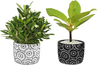 Plant Pots, ROSOLI 4.5 Inch Cement Planter Pots Indoor Outdoor Modern Flower Concrete Planter Pots Container with Drainage, Black and White Detailing for Small Plants, Succulents, Herbs, Set of 2