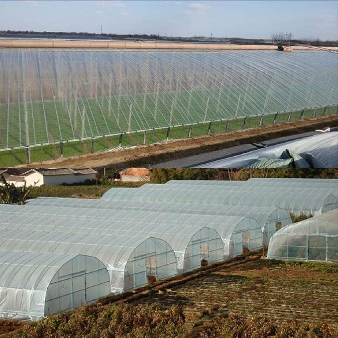 Clear Plastic Film Thickness Greenhouse Polyethylene Covering Garden Plant Shrub