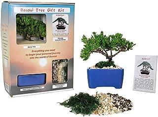 young juniper bonsai