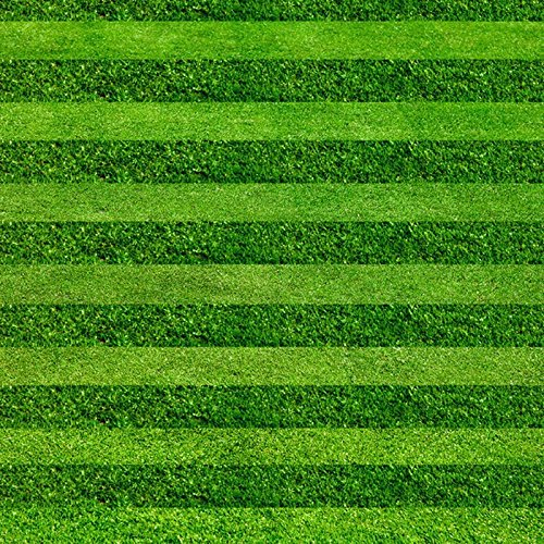 200seeds/Tasche Turf Golf Fußball mit Rasen Villa Spezial Evergreen Rasen Hochwertigen Blumen und Samen grün Land