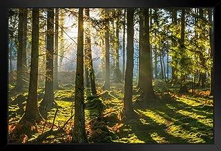 Poster Foundry Sunrise Shining Golden Fern Forest Woodland Photo Art Print Photo Art Print 20x14 inches Black 288897