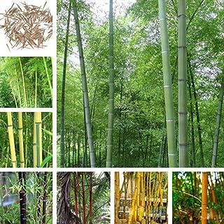 Amazon.es: plantas ornamentales