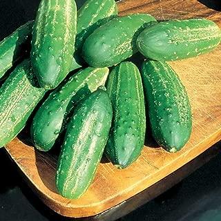 calypso pickling cucumber