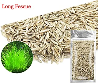 Aquarium Grass Plants Seeds,Aquatic Fescue Carpet Water Grass,Oxygenating Weed Live Pond Plant Seeds,Fish Aquatic Water Grass Decor,Easy to Plant Grow Maintain-10G (Green-Long F)