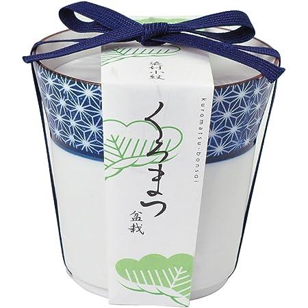 聖新陶芸 染付小紋盆栽栽培セット 黒松 GD-45201