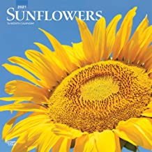 Sunflowers 2021 12 x 12 Inch Monthly Square Wall Calendar, Flower Floral Plant Outdoor Nature