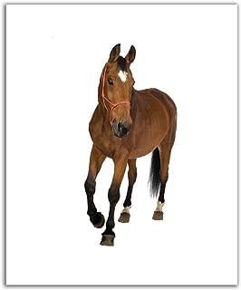 JP لندن poslt0006ustrip Lite قابلة للإزالة ملصق حائط من الفينيل ملصق جداري حصان بري ، من Gallop 19.75-inch x 60سم