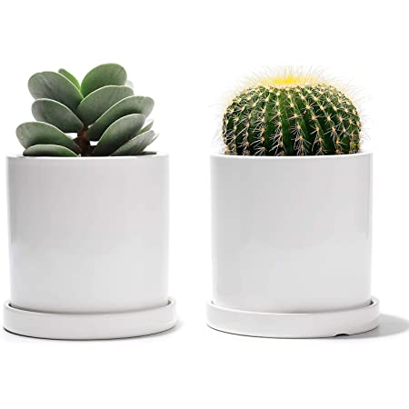 Succulent Planters Potey 800 3 5 Inch Small Cylinder Ceramic Plant Pots With Watering Drain Holes And Trays For Flowers Orchid Succulents Black Modern Home Decor Set Of 2 Snake Plant Gardening Kolenik