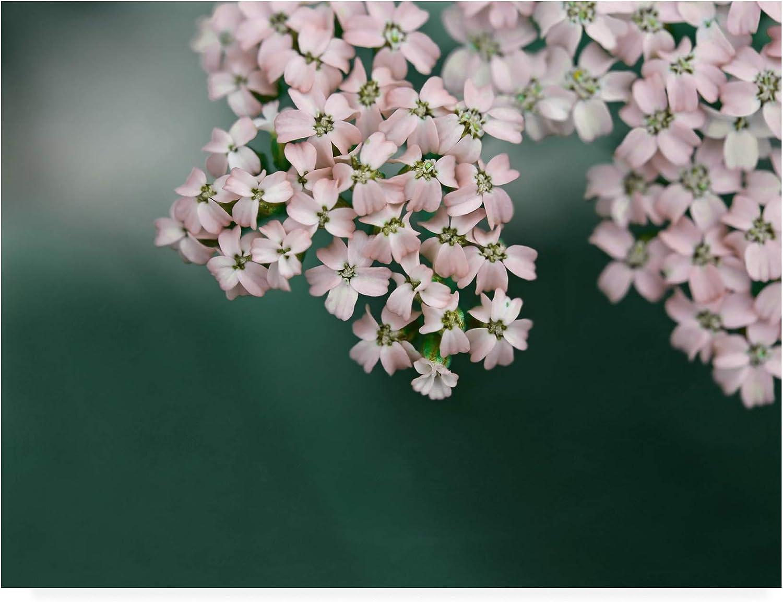 Trademark Fine Art IC01562C1419GG bluesh Pink Flowers by Brooke T. Ryan, 14x19, Multiple