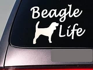 Beagle life 6