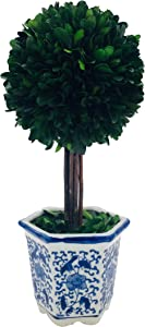 Galt International Preserved Boxwood Topiary Tree in Ceramic Pot - Plant and Table Centerpiece - Stunning Greenery and Plant Decor for Home | Blue & White Ceramic Pot (5