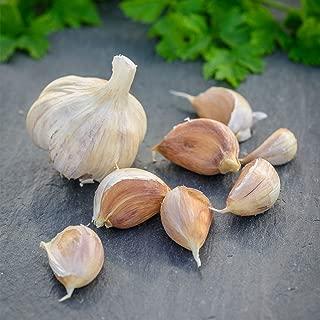 Burpee Garlic 'German Red' 1/2 LB (average 6 bulbs) Hardneck for Fall Planting