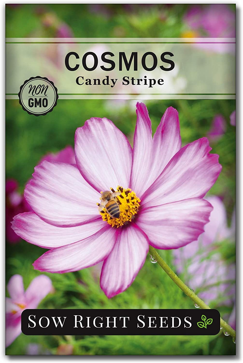 Sow Right Seeds - [Alternative dealer] Candystripe Planting for Flower 2021 Cosmos