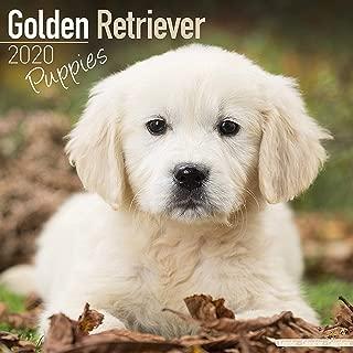 Golden Retriever Puppies Calendar 2020 - Dog Breed Calendar - Wall Calendar 2019-2020