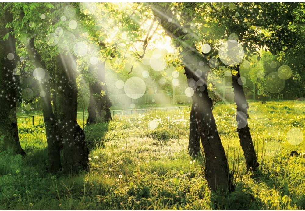 10x6.5ft Vinyl Spring Scenery Forest Landscape Photography Background Green Tree Sunshine Meadow Natural Landscape Backdrop Travel Party Child Adult Portrait Studio Props Decoration