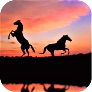 Best black horse images free Reviews